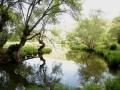 Rio Esteras en la finca